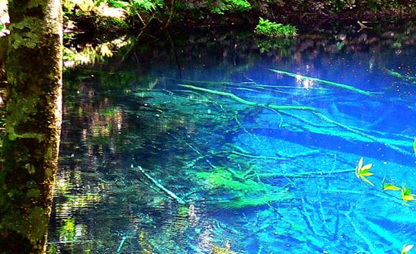 美しい12湖沼: たんぽぽの自然観察